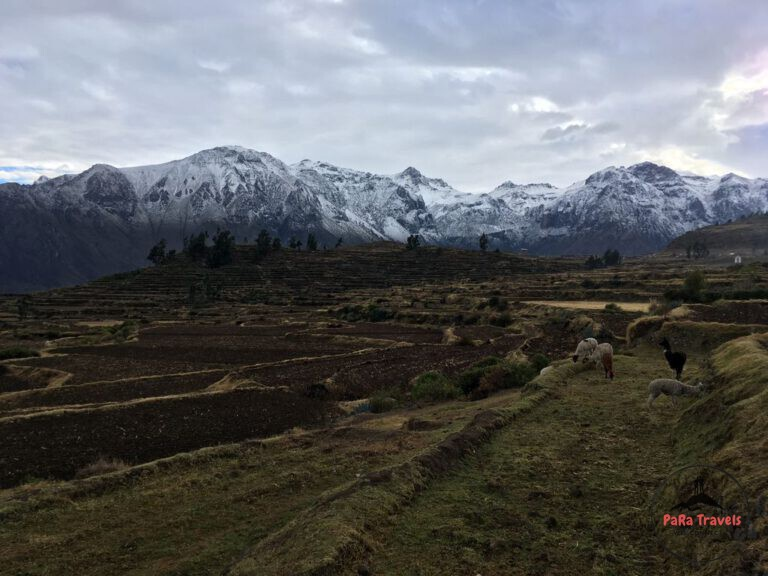 Colca Canyon terraces with snowpeaks