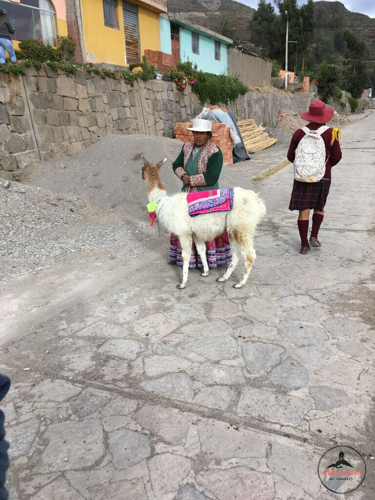 Typical Peruvian woman with alpaca